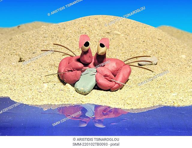 Cancer: crab on a beach