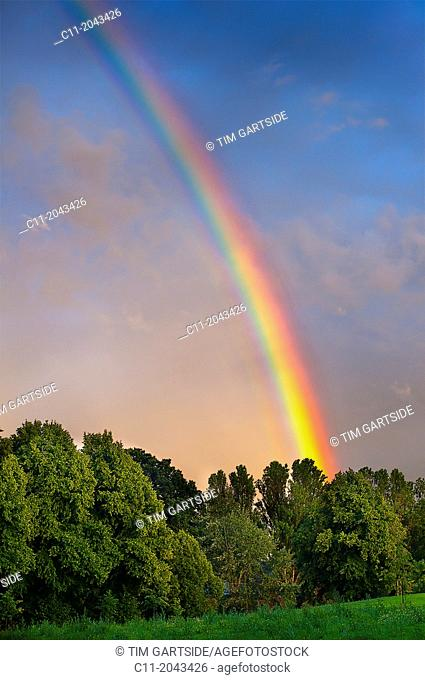 Rainbow over trees