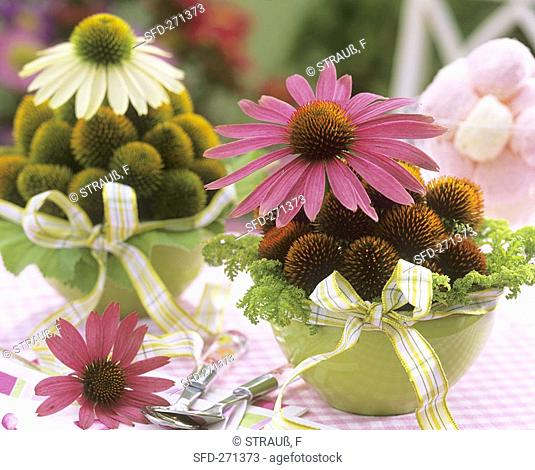 Two arrangements of purple coneflower Echinacea purpurea