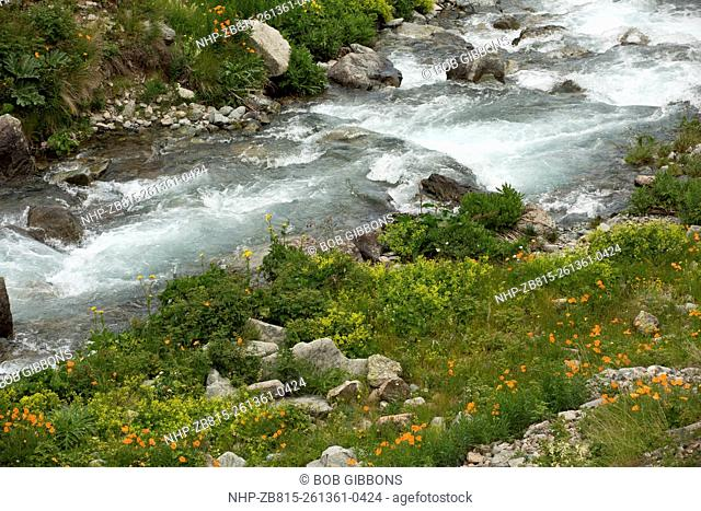 Fast-flowing glacial river, surrounded by flowery pastures, high in the Olgunlar valley, Kaskar, Pontic Alps, north-east Turkey