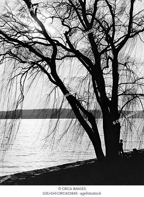 Tree Silhouette at Water's Edge with Moonlight, Potomac Park, Washington DC, USA, Detroit Publishing Company, 1910