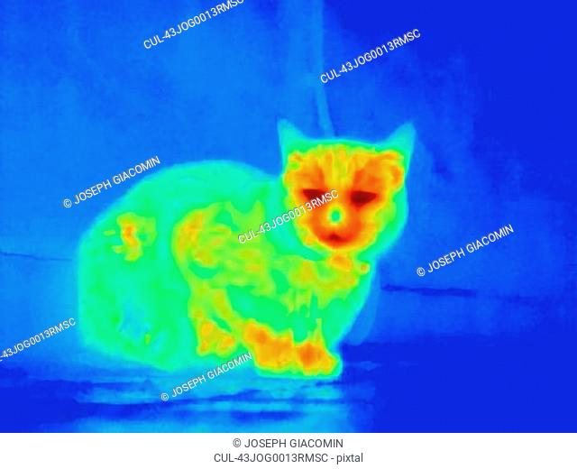 Thermal image of cat crouched on floor