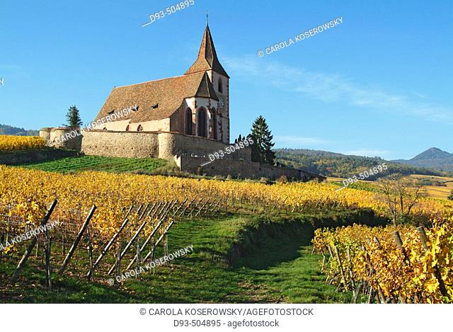 Hunawihr. Alsatian Wine Road. France