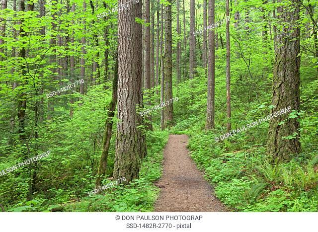USA, Oregon, Columbia River Gorge, Elowah Falls Trail, Footpath through forest