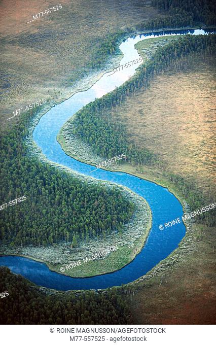 River meanders in wetland, aerial view. Lappland. Sweden