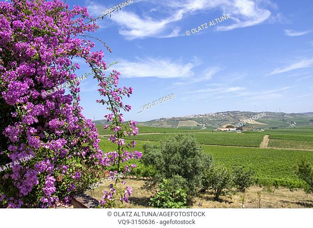 Vineyards and fuchsia flowers in vinho verde wine route, Douro, wine valley, Portugal