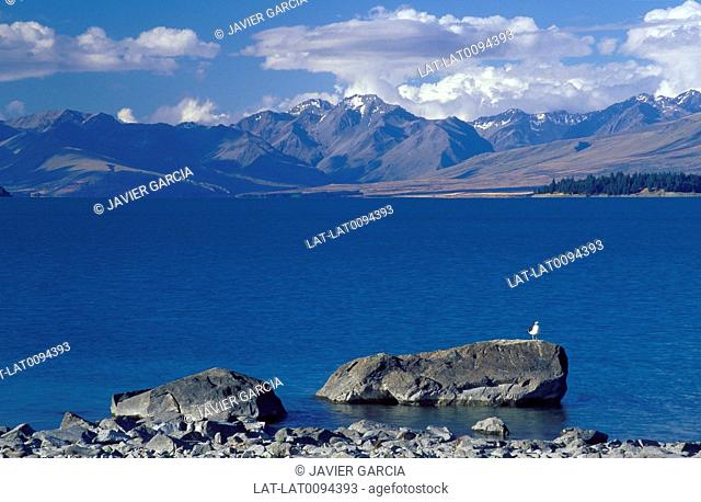 Lake. Calm water. Seagull on rock. View to Southern Alps,mountains. Clouds in sky