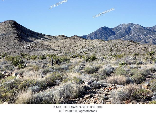 Joshua Tree National Park is a vast desert landscape that is beautiful and forbidding