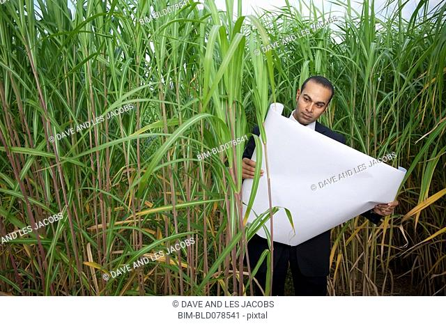 Asian businessman looking at blueprints in tall grass