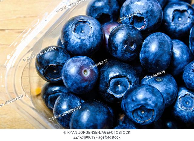Close up macro photograph of fresh vibrant blue berries in a clear see-through punnet