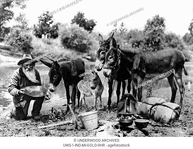 California: no date.A California gold miner at his camp with his donkeys