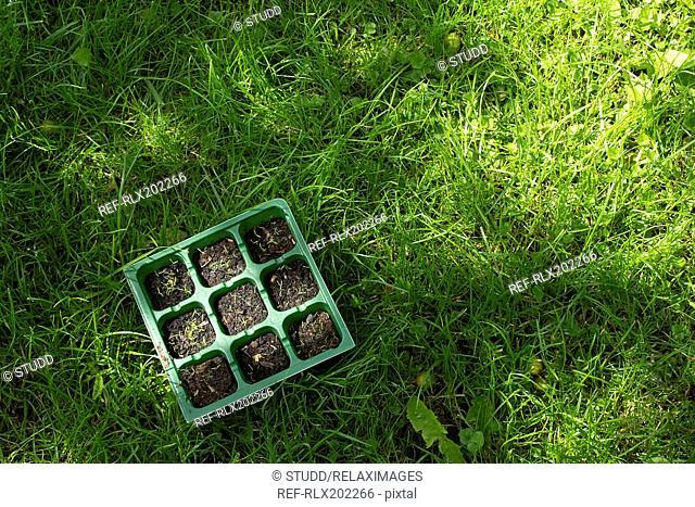 Tray of seedlings on grassy field in garden