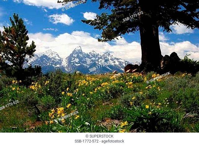 USA, Wyoming, Scenic view of Grand Teton in Grand Teton National Park