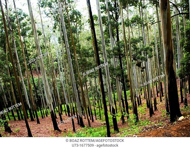Beautiful forests in Sri Lanka's hill country