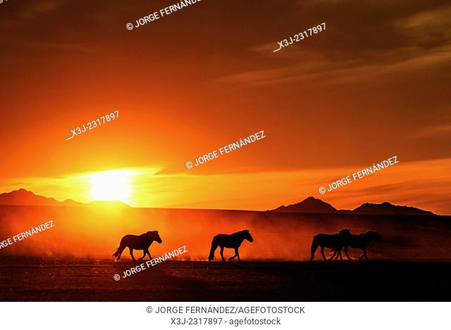 Sunset and horses, Mongolian steppe