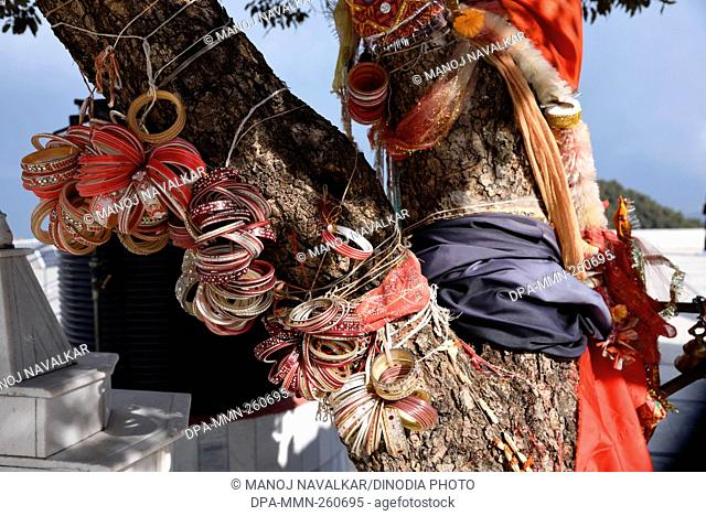 Bengals tied on tree at Kali Mata temple, himachal pradesh, India, Asia