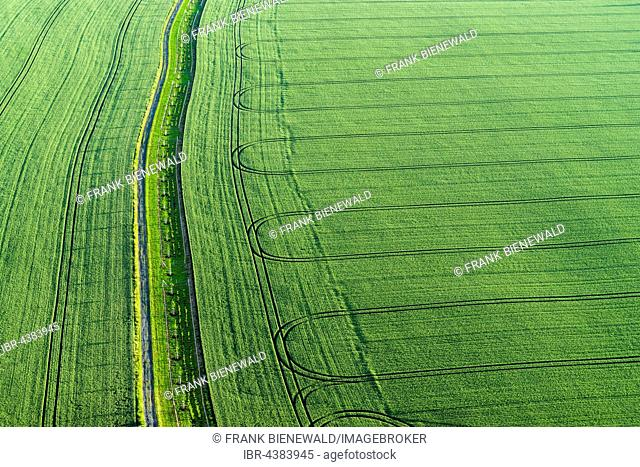 Footpath and the tracks of a tractor on a green field, Königstein, Saxony, Germany