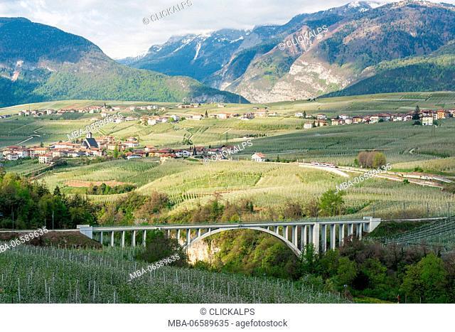 Italy, Trentino Alto Adige, apple flowering of Non valley and S, Giustina bridge