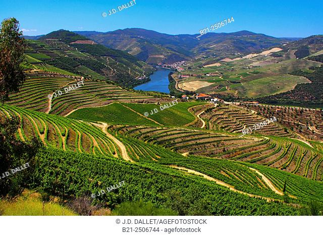 Vineyards on terraces by Pinhão, Douro river valley, Porto wine growing area, Portugal