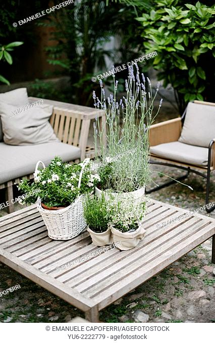 Sitting area with plants and sofas and chairs with table