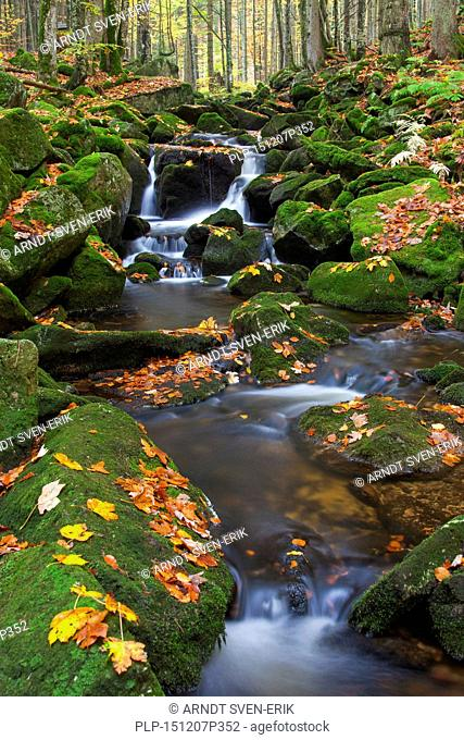 Waterfall on the Kleine Ohe / Grafenauer Ohe river in deciduous woodland, Bavarian Forest National Park, Bavaria, Germany