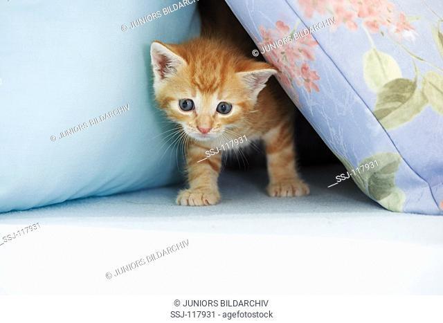 kitten between pillows restriction: Tierratgeberbücher - animal guidebooks