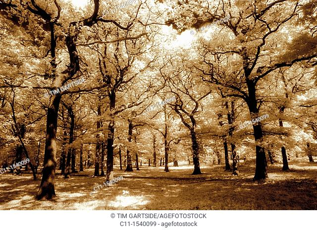 wood beckenham kent london england uk, infra red film effect
