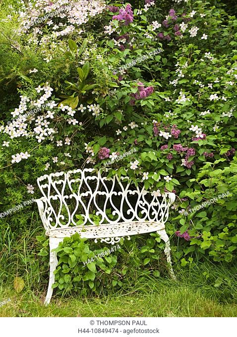 Wales, Flintshire, white, wrought, iron, seat, spring, garden, clematis, montana, lilac, bush, Syringa Vulgaris, flowe