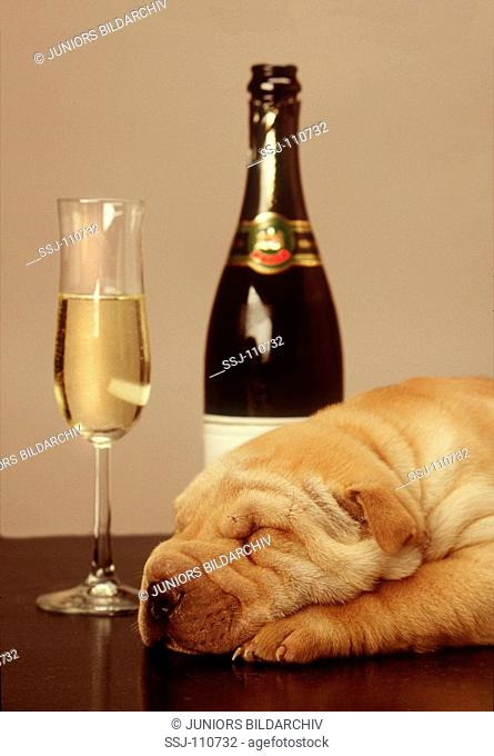 New Year's Eve : dog beside champagne