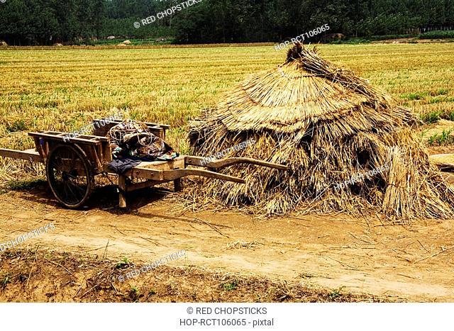 Cart near a haystack in a field, Zhigou, Shandong Province, China