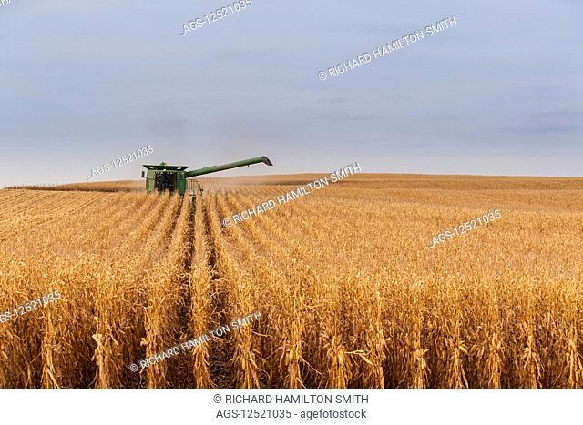 Combine picking corn during corn harvest, near Nerstrand; Minnesota, United States of America