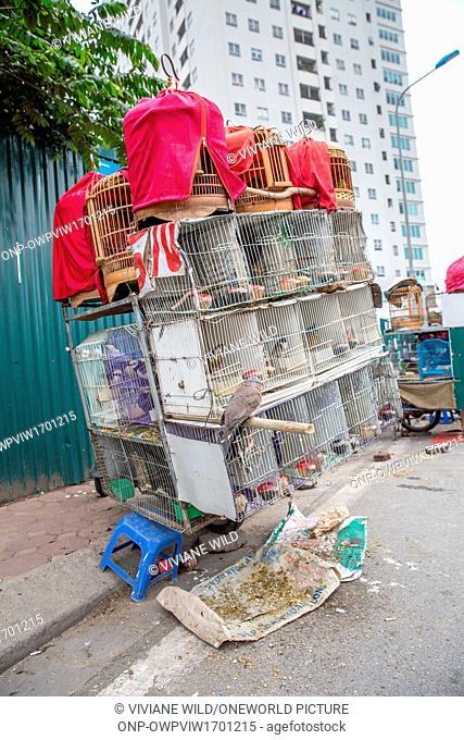 Vietnam, Hà N?i, Ba Ðình, Cong Vi Ba Dinh district / Q. Ba Dính, birds in the cage at a bird sellers