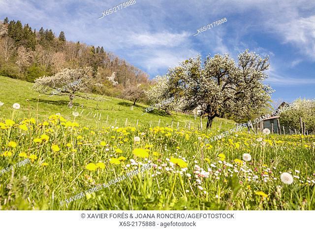 Fields near Chapeiry in Haute-Savoie, Rhône-Alpes, France