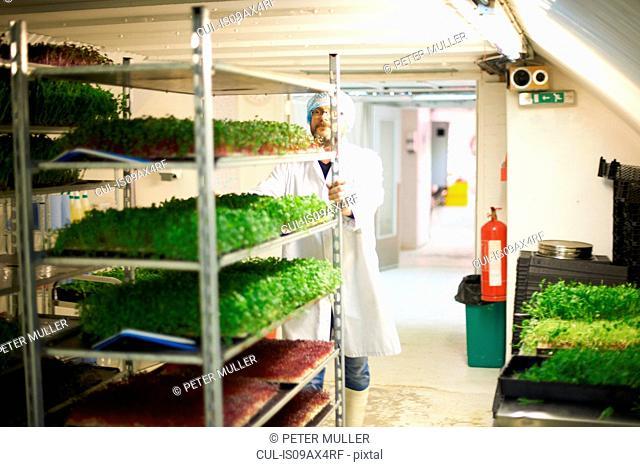 Worker pushing trolley of freshly grown vegetables