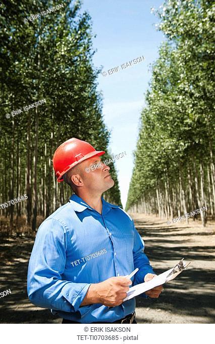 Engineer standing between orderly rows of poplar trees in tree farm