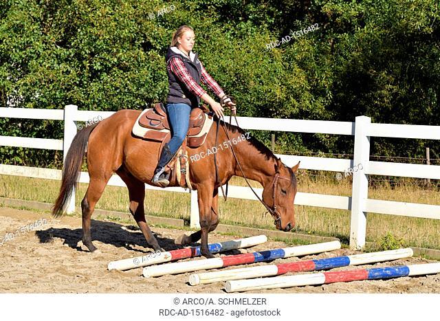 Horse Training, western horse, ground work, young horse, rails, rail