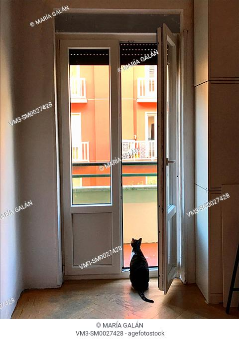 Cat sitting at an open door, looking at the street