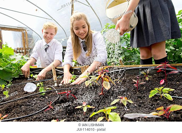 Middle school students with watering can watering plant seedlings in greenhouse