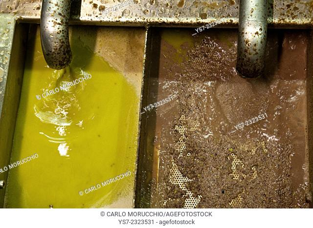 Olives pressing in a mechanic oil mill in San Gimignano, Siena, Tuscany, Italy