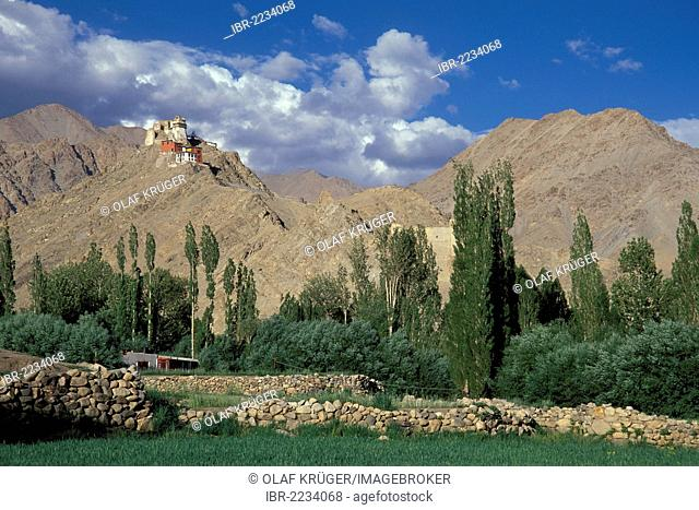Old Royal Palace, Namgyal Monastery Tsemo Gompa, polar trees, mountain landscape, Ladakh district, Jammu and Kashmir, North India, India, South Asia, Asia