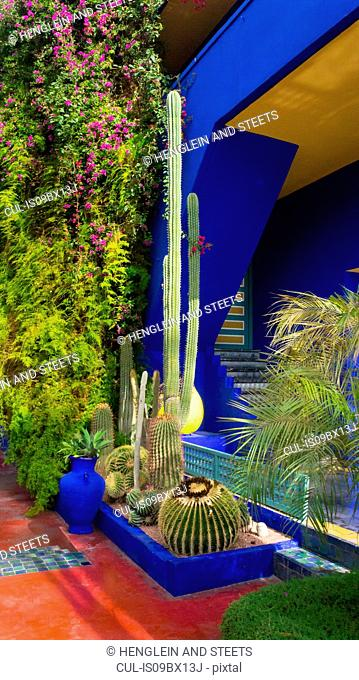 Cacti and bougainvillea plants by vibrant blue entrance