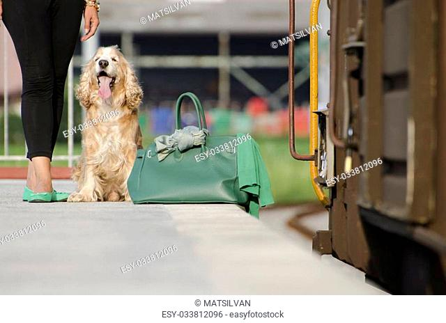 Woman legs and a dog with her green bag waiting on a train station