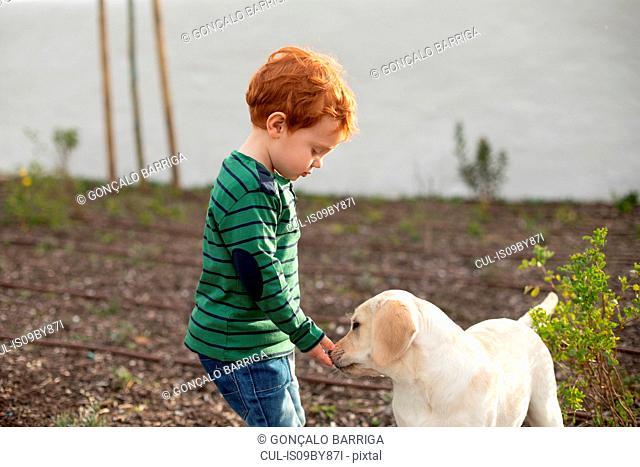 Boy giving pet puppy training treat