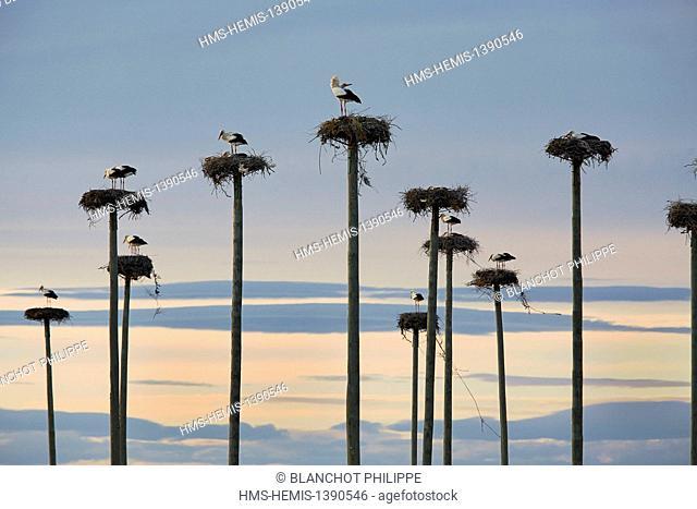 Spain, Extremadura, Malpartida de Caceres, Los Barruecos, Nests of white storks on masts