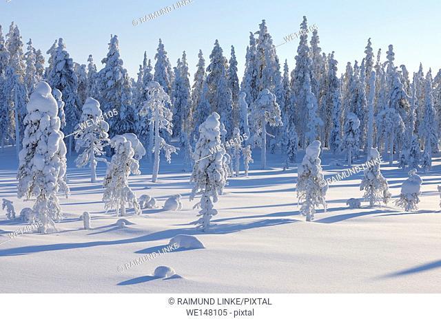 Snow covered landscape in winter, Posio, Kuusamo, Nordoesterbotten, Pohjois Pohjanmaa, Finland, Suomi