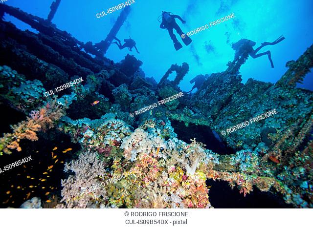 Scuba divers investigating coral covered shipwreck, Red Sea, Marsa Alam, Egypt
