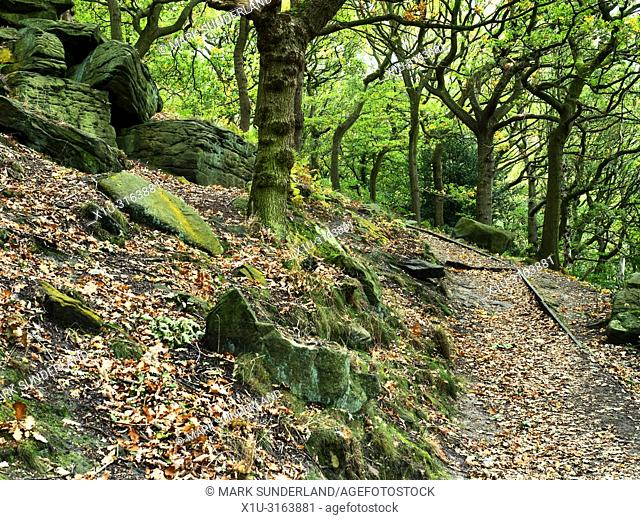 Path through early autumn woodland at Shipley Glen near Baildon West Yorkshire England