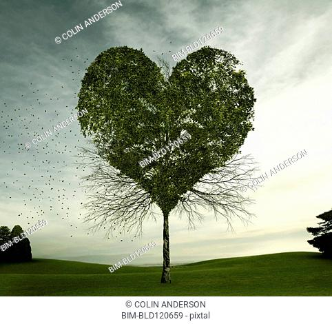 Tree growing in heart-shape