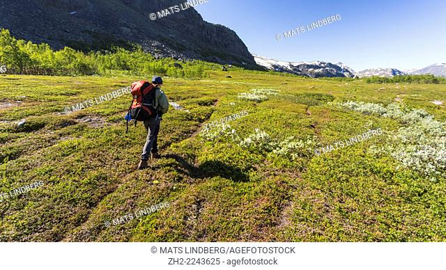 Woman hiking in swedish mountain area, mountains in backround with snow on them in Gällivare, swedish lapland in the month of july