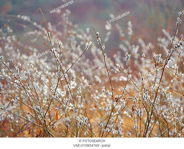 plants, nature, field, plant, scenery, film